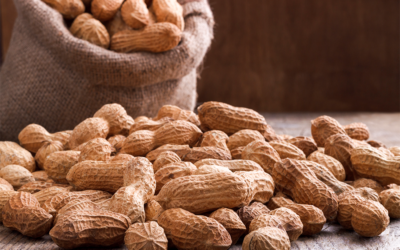 Peanut Allergy Immunotherapy Acquires FDA Approval With Siron Clinical's Support